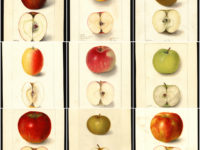Bean There: Comparing Apples to Apples