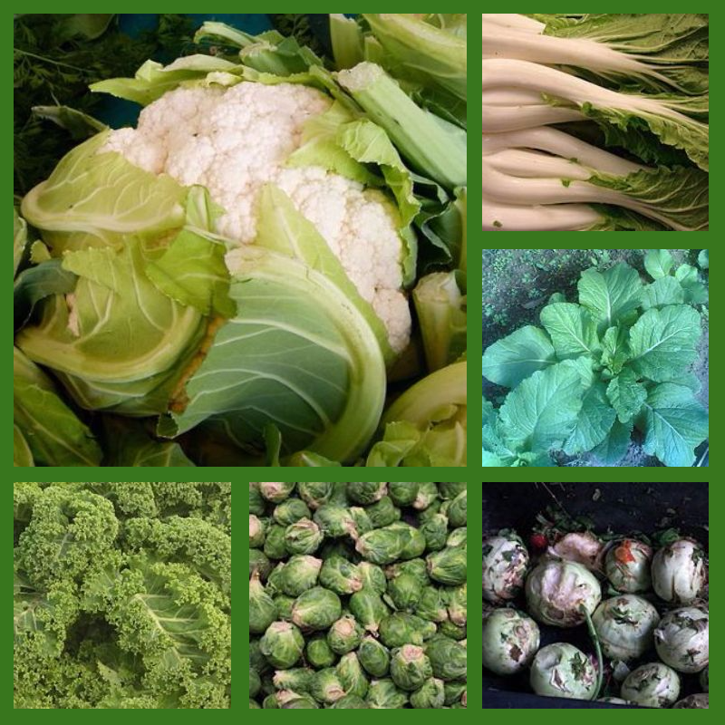 """Chinese cabbage Forest & Kim Starr [CC BY 3.0 (http://creativecommons.org/licenses/by/3.0)], via Wikimedia Commons Cauliflower By Dinkum (Own work) [CC0], via Wikimedia Commons Broccoli fir0002 