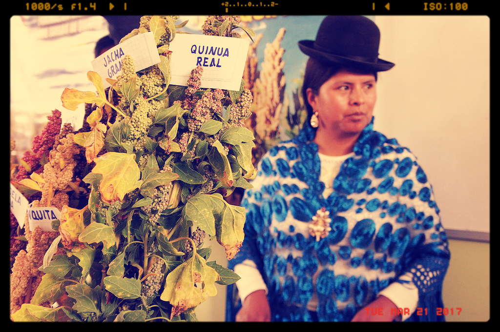 Quinoa grower, Bolivia (By Michael Hermann (Own work) [CC BY-SA 4.0 (http://creativecommons.org/licenses/by-sa/4.0)], via Wikimedia Commons)