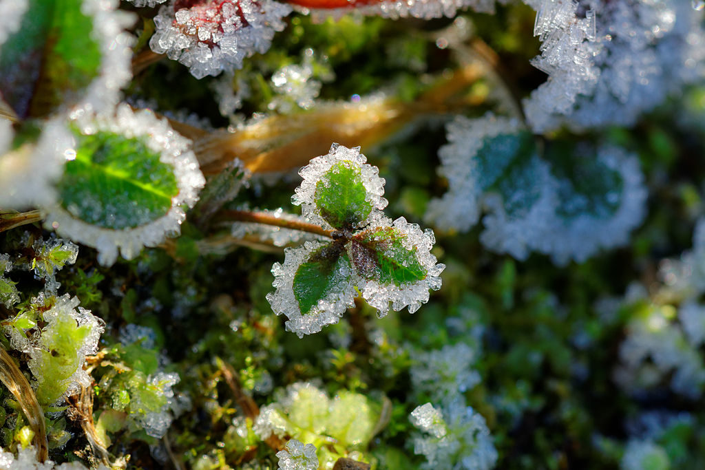 Frost. (Photo by Thomas Bresson [CC BY 3.0 (http://creativecommons.org/licenses/by/3.0)], via Wikimedia Commons)