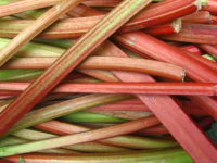 Rhubarb stalks (Photo by By Jeremy Keith from Brighton & Hove, United Kingdom (Rhubarb  Uploaded by Fæ) [CC BY 2.0 (http://creativecommons.org/licenses/by/2.0)], via Wikimedia Commons)
