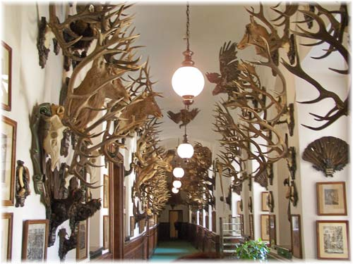 The Archduke Franz Ferdinand's hunting trophies, Konopiště Castle, Czech Republic.