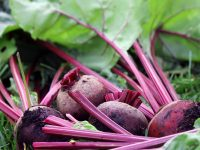 Beets. (Photo by Madeline Yakimchuk)