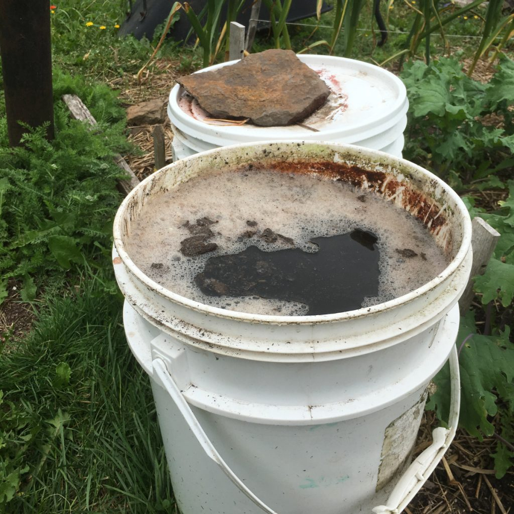 Compost tea. (Madeline Yakimchuk photo)