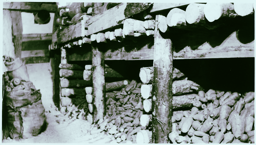Vegetables in a root cellar. (Source: U.S. National Archives and Records Administration, Public Domain, via Wikimedia Commons)