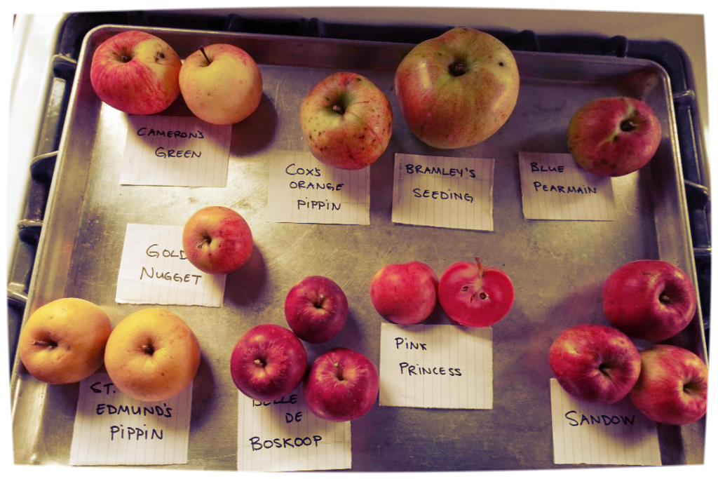 Michelle's exotic apples. (Photo by Rosie Smith)