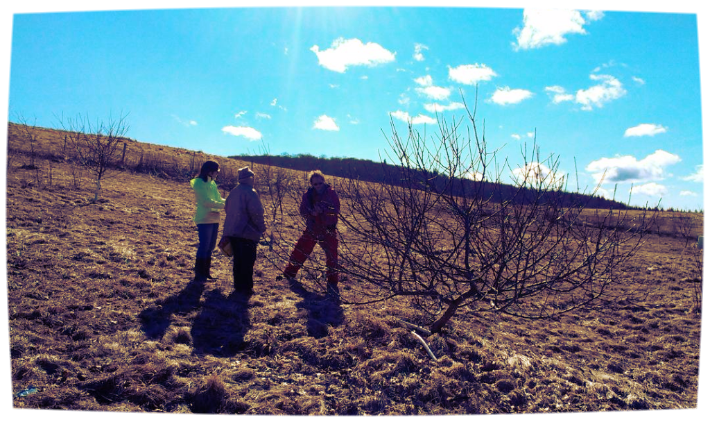 Collecting scion wood. L-R Mary Campbell, Michelle Smith, David Baldwin. (Photo by Catherine Campbell)