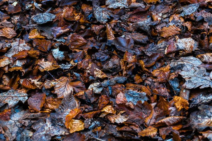 Leaf mulch. (Photo by Bobby McKay, CC-by-ND 2.0 https://creativecommons.org/licenses/by-nd/2.0/