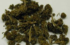 Cannabis (Public Domain via Wikimedia Commons)