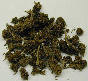 Cannabis (Public Domain via Wikimedia Commons)