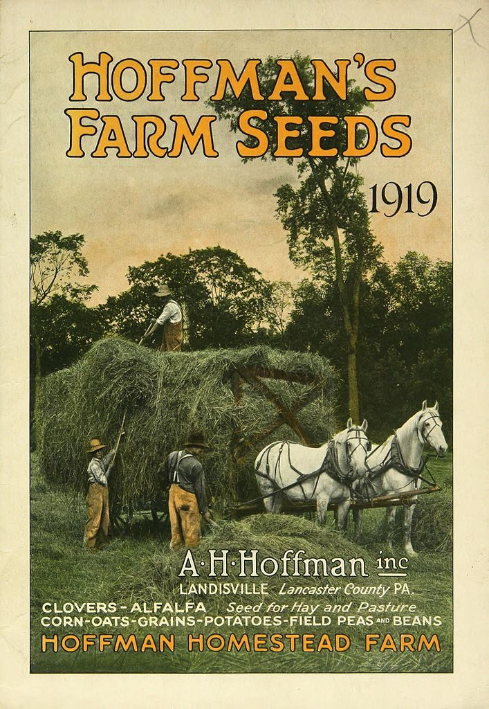 By A.H. Hoffman Seeds, Inc.; Liberty Hyde Bailey Hortorium. Public Domain via Wikimedia Commons