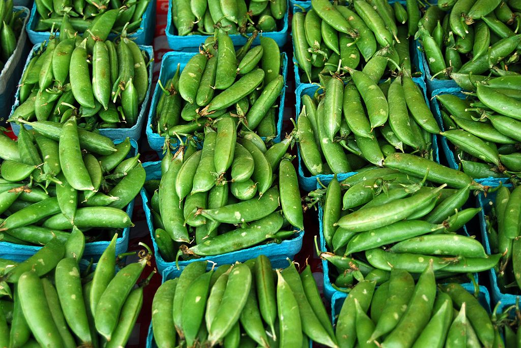 Sugar snap peas. (Photo by Alice Henneman, https://www.flickr.com/photos/alicehenneman/ [CC BY 2.0 (http://creativecommons.org/licenses/by/2.0)], via Wikimedia Commons)