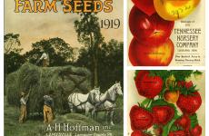 A.H. Hoffman Seeds, Inc.; Boatman's Tennessee Nursery. Liberty Hyde Bailey Hortorium (https://plantbio.cals.cornell.edu/hortorium). Public Domain, via Wikimedia Commons