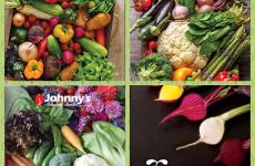 Gardening Tips Week 2: Fun with Seed Catalogs