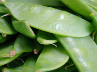 Snow peas. (Photo by Vegan Feast Catering (Snow Pea) [CC BY 2.0 (http://creativecommons.org/licenses/by/2.0)], via Wikimedia Commons)