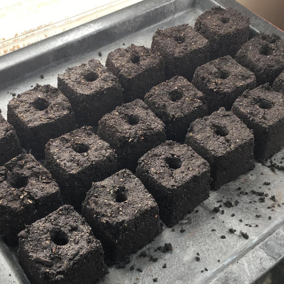 Soil blocks. (Photo by Madeline Yakimchuk)