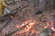 Parks staff lighting a prescribed fire at La Mauricie National Park (Source: Parks Canada)
