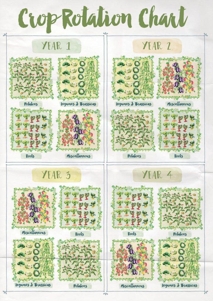 Source: A Free Range Life, Annabel Langbein https://www.annabel-langbein.com/annabel/blog/crop-rotation/