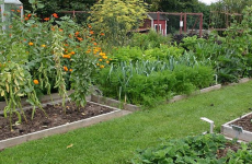 Small-scale crop rotation at the Ecological Garden at Odder. (Photo by Sten, CC BY-SA 3.0 https://creativecommons.org/licenses/by-sa/3.0), via Wikimedia Commons