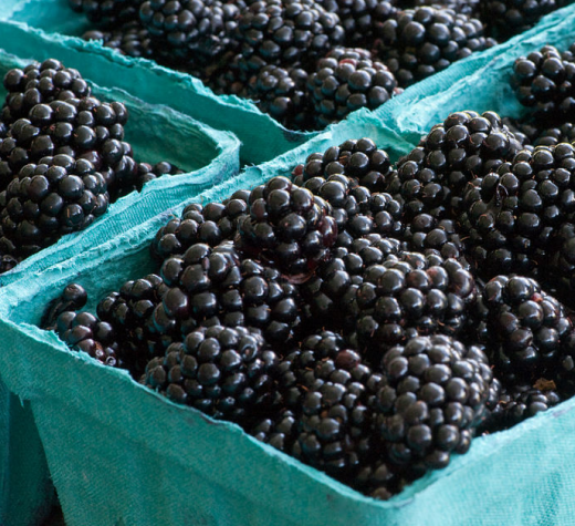 Blackberries. (Photo by Dwight Sipler from Stow, MA, USA, CC BY 2.0, https://creativecommons.org/licenses/by/2.0, via Wikimedia Commons