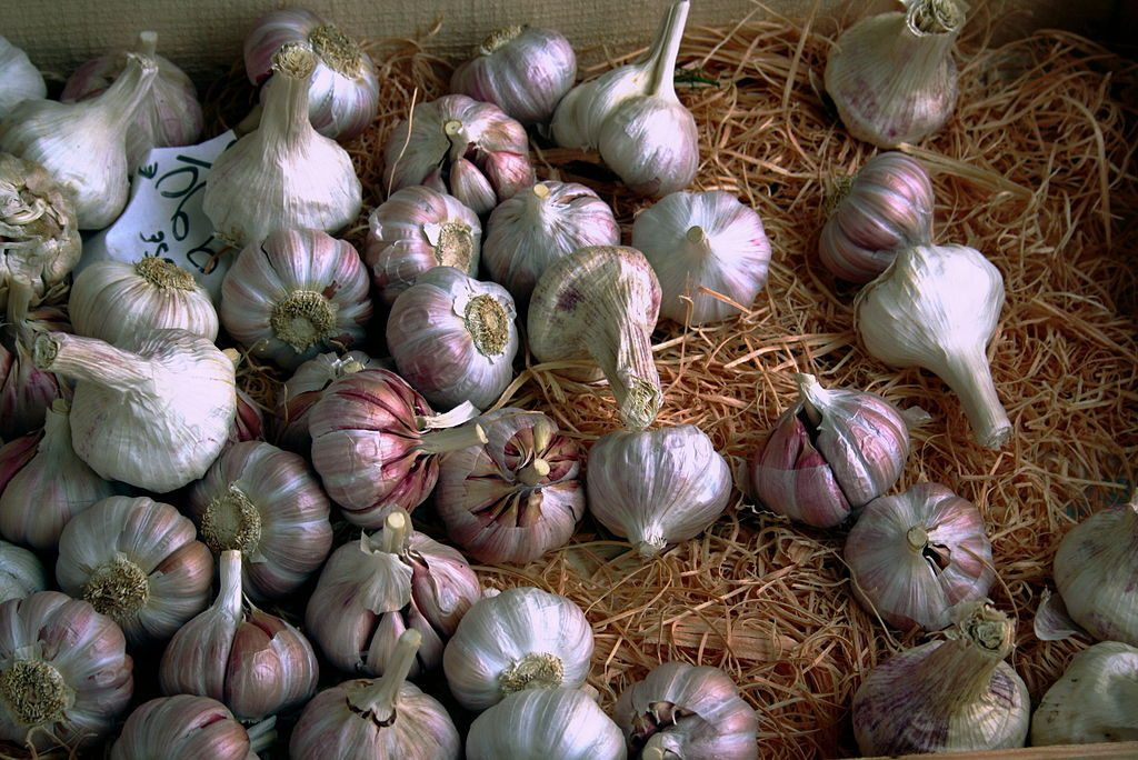 Garlic. (Photo by Usien, GFDL http://www.gnu.org/copyleft/fdl.html, from Wikimedia Commons