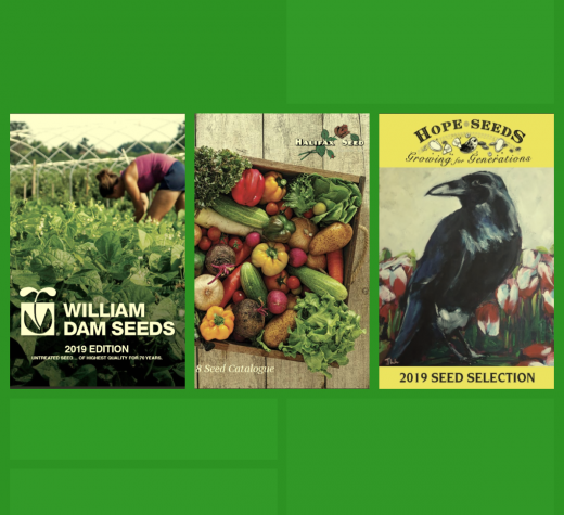 Gardening Tips: Time to Read About Seed