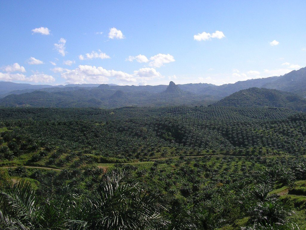 View of palm oil plantation in Java, Indonesia.