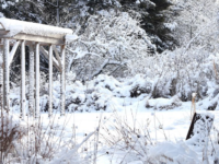 """Lynn's Garden in Winter"" (cropped). A pollinator garden, it is ""a sea of milkweed, echinacea, bergamot, veronicastrum, and a variety of grasses."" (Photo by Lynn Farrell via A Nova Scotia Garden in Winter https://novascotiagarden.com/)"