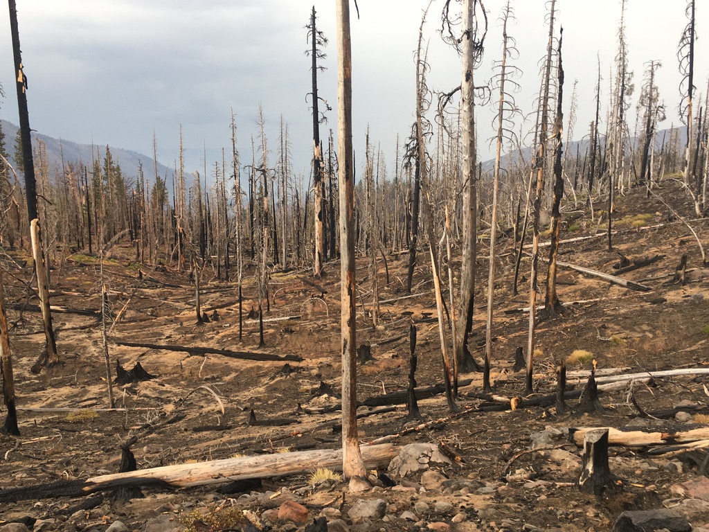 High elevation forest above Biddle Pass burned in 2014 and re-burned in 2020. Photo by Vernon Wolf.