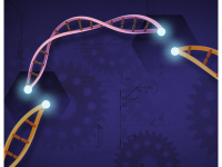 CRISPR-Cas9 is a customizable tool that lets scientists cut and insert small pieces of DNA at precise areas along a DNA strand. This lets scientists study our genes in a specific, targeted way. Credit: Ernesto del Aguila III, National Human Genome Research Institute, NIH (Public Domain)