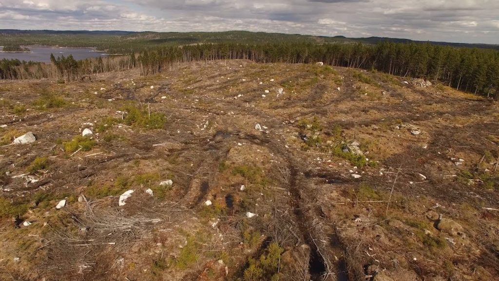Clearcut on NS crown lands.