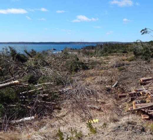 2018 site preparation for proposed Goldboro LNG project. Photo: Alexander Bridge courtesy Halifax Examiner https://www.halifaxexaminer.ca/province-house/the-goldboro-gamble/