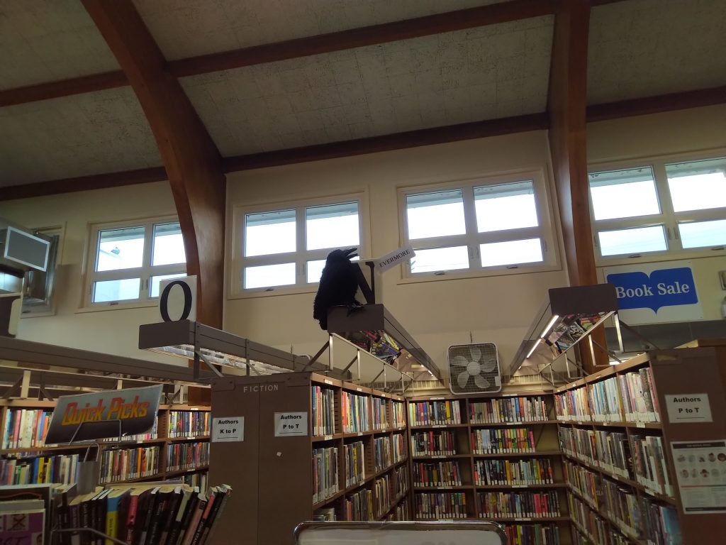 McConnell Library Interior, Sydney, NS